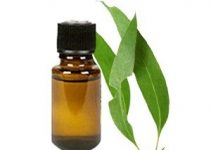 How to Get Rid Of a Stuffy Nose Fast – Overnight, Instant, Quickly, in 40 Seconds - Eucalyptus Oil